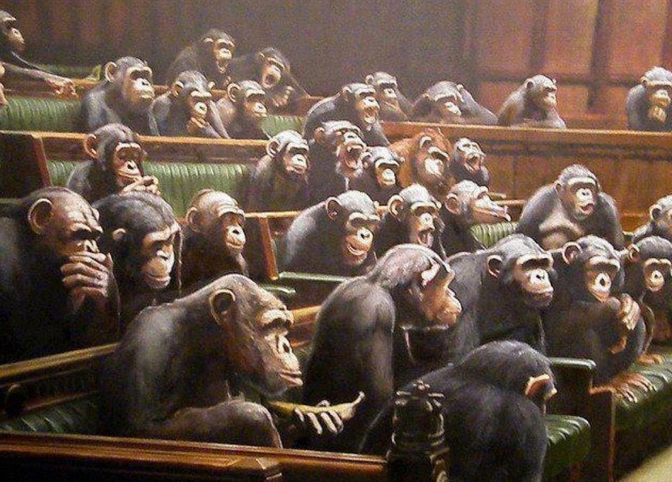 Image result for parlamentul cu maimute